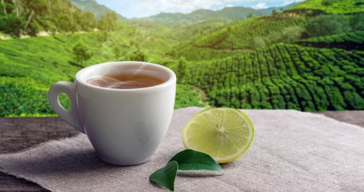 Yeşil Çay ile Kilo Vermek Mümkün mü?