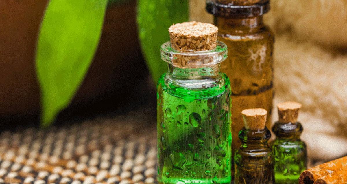 Çay Ağacı Yağı Faydaları Nelerdir? Nasıl Kullanılır?